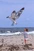 boy and sea gull at beach